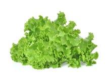Breda smör på head grönsallat, det knapriga huvudet, isberget som isoleras på den vita backgroen arkivfoto