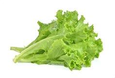 Breda smör på head grönsallat, det knapriga huvudet, isberget som isoleras på den vita backgroen arkivbilder