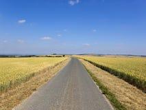 Brede blauwe hemel over rijpende tarwegebieden en een landweg royalty-vrije stock foto