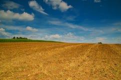Brede cornfield royalty-vrije stock afbeeldingen