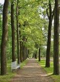 Brede Eiken Steeg in een oud park Royalty-vrije Stock Foto