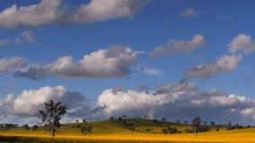 Brede geschotene gebieden van canola in Australië stock videobeelden
