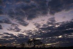 Brede mening van bewolkte Namibian hemel en boomsilhouetten tegen zonsopgang stock afbeeldingen