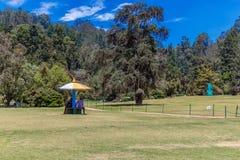 Brede mening van botanisch met gras, bomen, installaties, weg, Ooty, India, 19 Augustus 2016 stock foto