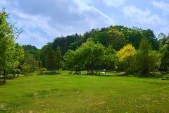 Brede mening van groen gebied met bomen in de Botanische Tuin van Pyunggang in Pocheon, Zuid-Korea Royalty-vrije Stock Afbeeldingen