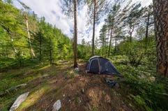 Brede panoramatent bij het kamperen in het hout Royalty-vrije Stock Fotografie