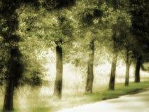 Brede rijweg met mooi aangelegd landschap Stock Foto's