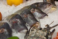 Brede selectie van vissen op de vertoning van de zeevruchtenmarkt Royalty-vrije Stock Fotografie