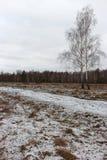 Brede sneeuwweide met weg en twee berken in bewolkte dag De wintergebied met bos en bevroren bomen Het landschap van de winter Stock Foto's