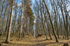 Brede weg in de lentebos tegen de achtergrond van bomen Royalty-vrije Stock Foto's