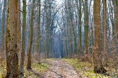 Brede weg in de lentebos tegen de achtergrond van bomen Royalty-vrije Stock Fotografie