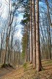 Brede weg in de lentebos tegen de achtergrond van bomen Royalty-vrije Stock Afbeelding