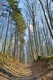 Brede weg in de lentebos tegen de achtergrond van bomen Stock Afbeeldingen