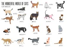Breed cats brochure cards set. Animal traditional template of flyear, magazines, posters, book cover, banners. kitten Royalty Free Stock Images