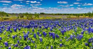 Breed die Hoekschot van een Gebied met Beroemd Texas Bluebonnet Wildflowers wordt bedekt royalty-vrije stock afbeelding