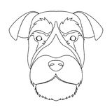 A breed of a dog, a risen schnauzer.Risen Schnauzer Muzzle single icon in outline style vector symbol stock illustration Royalty Free Stock Photos