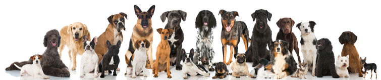 Free Breed Dogs Royalty Free Stock Image - 51407706