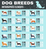 Breed Dogs Infographics Stock Image