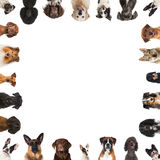 Breed dogs. Many heads of breed dogs isolated on white Royalty Free Stock Images