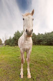 Breed hoekbeeld van een paard Stock Fotografie