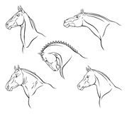 Breed of horse. Head of horse on a white background royalty free illustration