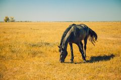 Breed horse farm, equestrian herd stock photography