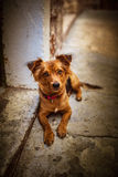 Breed mongrel homeless Royalty Free Stock Images