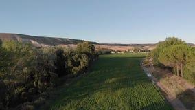 Breed satellietbeeld van de jonge aanplanting van het Raapzaadgewas op een heldere zonnige dag stock videobeelden