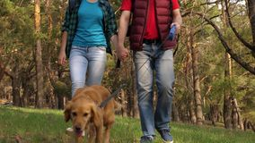 Breeder with a dog and an adult daughter are walking. Family travels with a dog in the woods. Travelers dad, daughter stock footage