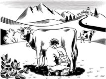Breeder intent to milk a cow. On a mountain meadow royalty free illustration