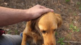 Breeder is petting his beloved dog. Walk with your pet. Happy dog with the owner. A man hand caresses a dog with his royalty free stock photography