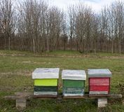 Breeding bees: hives royalty free stock photo