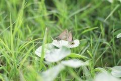 Breeding butterflies Royalty Free Stock Photo