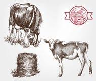 Breeding cows Stock Photo