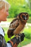Breeding Eagle Owls Stock Images