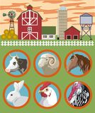 Breeding of farm animals Stock Image