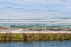 Breeding of fish farms,trout Stock Photography