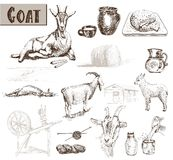 Breeding goats Royalty Free Stock Images