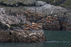 Breeding-ground of sea lions Stock Images