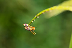 The breeding of insects Royalty Free Stock Image