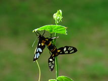 The breeding of insects - butterflies in the garden. Stock Photos