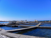 A breeding of mussels. In Salento coast Royalty Free Stock Images