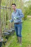 Breeding of plant varieties. Work stock photography
