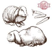 Breeding rabbits. Set of vector sketches on a white background stock illustration