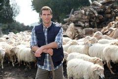 Breeding sheeps Stock Photos