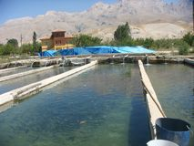 Breeding of trouts with behind the mountains of the Taurus in Turkey. Long great tubs of water. Water that goes out of pipes.  Big shuted plastic blue cover in Stock Photography