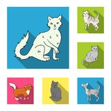 Breeds of cats flat icons in set collection for design. Pet cat vector symbol stock web illustration. Breeds of cats flat icons in set collection for design Royalty Free Stock Photos