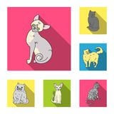 Breeds of cats flat icons in set collection for design. Pet cat vector symbol stock web illustration. Breeds of cats flat icons in set collection for design Royalty Free Stock Photo