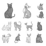 Breeds of cats monochrome icons in set collection for design. Pet cat vector symbol stock web illustration. Breeds of cats monochrome icons in set collection Royalty Free Stock Photos