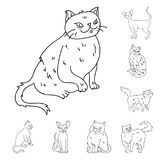 Breeds of cats outline icons in set collection for design. Pet cat vector symbol stock web illustration. Breeds of cats outline icons in set collection for Stock Photography